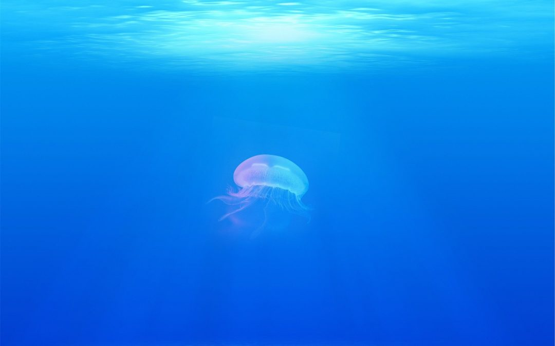 Online Café scientifique: «Bioacoustique: les sons des océans »